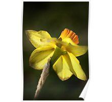 Daffodils Skirt Poster