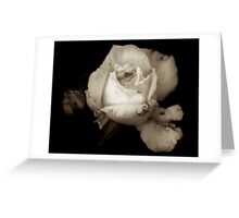 Stained Ivory Greeting Card