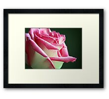 Shimmering Elegance Framed Print
