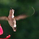 Fanciful Flight by Lolabud