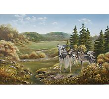 Wolves from Grandpa's Hills Photographic Print