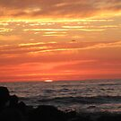sunsetting on the ocean by Dianne Rini