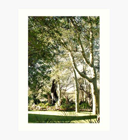 THE FEVER TREE - Acacia xanthophloea Art Print