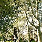 THE FEVER TREE - Acacia xanthophloea by Magaret Meintjes