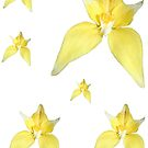Yellow Cowslip Orchid Stickers by STHogan