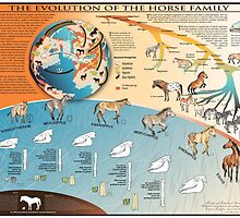 Horse Evolution by Michelle Tribble