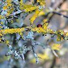 Tree Lichen........... by lynn carter