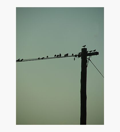 On a wire Photographic Print