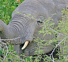 Elephant Hunger - Wildlife Happiness  by LivingWild