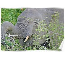 Elephant Hunger - Wildlife Happiness  Poster