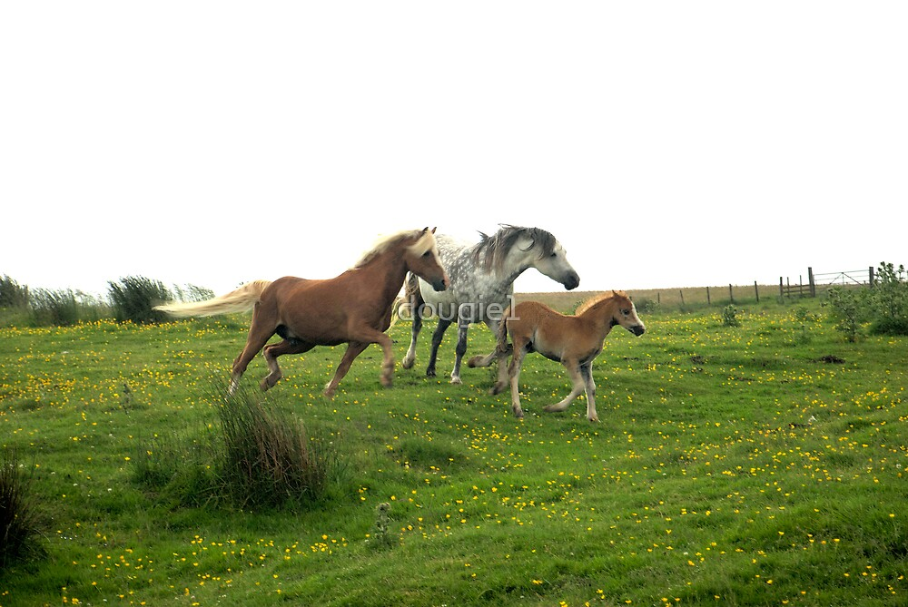 Ponies by dougie1