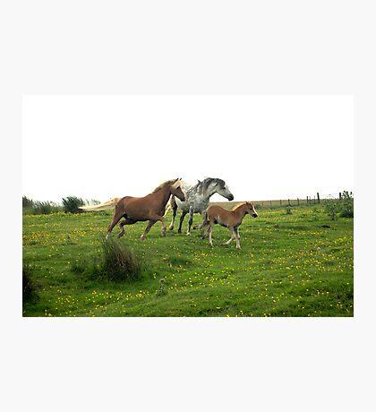 Ponies Photographic Print
