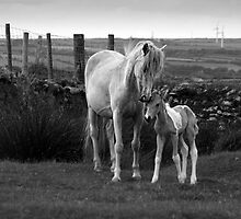 Mother and foal by M G  Pettett