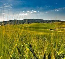 corn field by vinciber