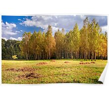 Glade with birches Poster
