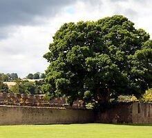 Ancient Walls by John Dalkin