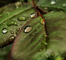 Tears from heaven by Gaby Swanson  Photography