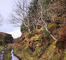 Trail by Simon Pattinson