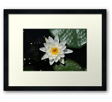 Fallen Star... Framed Print