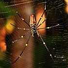 "golden orb by Phineous ""Flash""   Cassidy"
