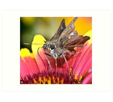 Ver'Moth'   Cocktail  ! Art Print