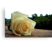 A Rose For Tina Canvas Print
