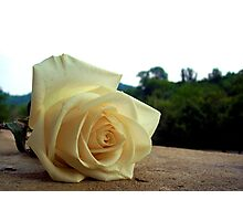 A Rose For Tina Photographic Print