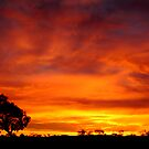 Sunrise, Batton Hill,Simpson Desert,N.T.  by Joe Mortelliti