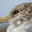 A Noble Head.... taken for granted scavengers of the sea. by Larry Llewellyn