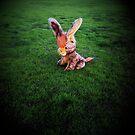 donkey days by Jaye Heraud