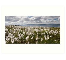 Bog Cotton on Binevenagh Art Print