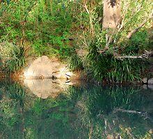 Afternoon glow on Dingo Creek by Bev Woodman