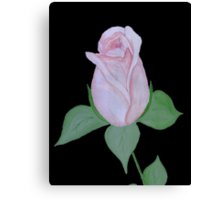 A Coral Rose Canvas Print