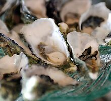Oysters by Carine  Boustany