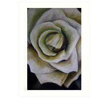 The white Rose Art Print
