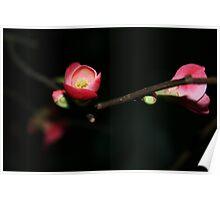 Winter Blossom Poster