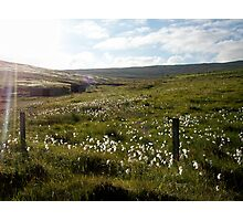 field of summer Photographic Print
