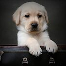 Toby Puppy  by tess1731