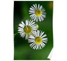 Little Wild Swamp Flowers Poster