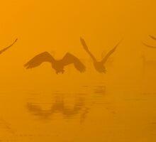 Pen Ponds Take-off by Kasia Nowak