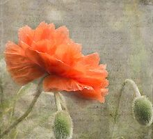 100 Years - In memory of fallen soldiers WW1 by SusieBImages