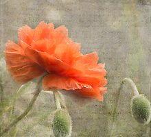 100 Years - In memory of fallen soldiers WW1 by SusieBImages