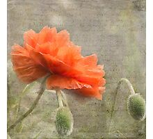 100 Years - In memory of fallen soldiers WW1 Photographic Print