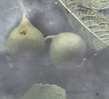 Figs through the greenhouse window by hilarydougill