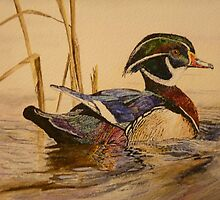 WOOD DUCK - water colour by Marilyn Grimble