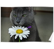 Cat Sniff Poster