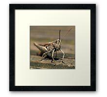Wooden Hopper Framed Print