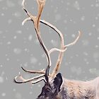 Elk by Natalie Easton