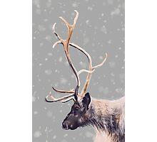 Elk Photographic Print