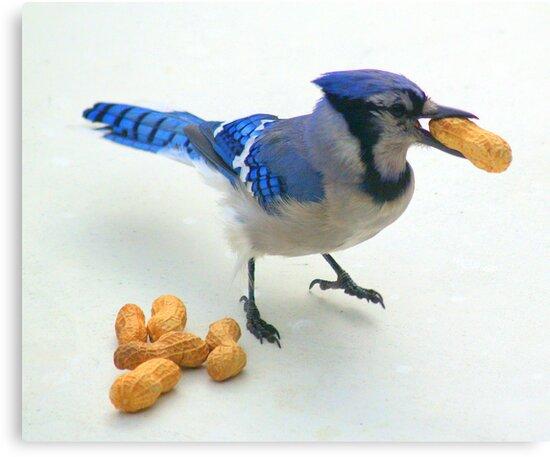 Peanut Thief by tuffcookie